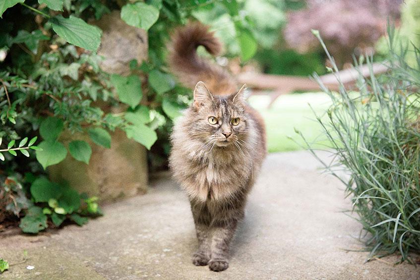 fluffy tabby cat in green garden
