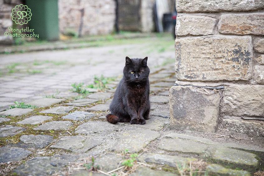 one eyed black cat sat on cobbled farm yard