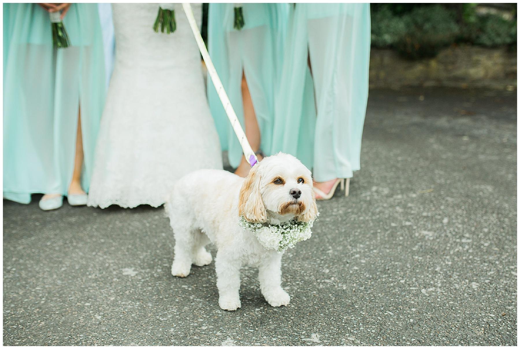 Hyde Bank Farm - Dog friendly wedding venue